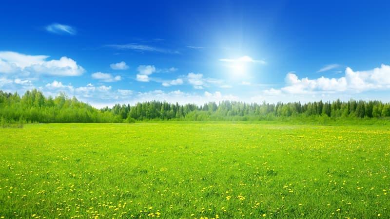 природа Запитання-цікавинка: Як називається сукупність видів рослин на певній території?