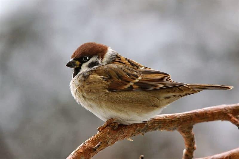 Natur Wissensfrage: Welcher Vogel fliegt lautlos?