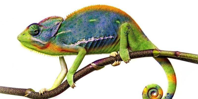 природа Запитання-цікавинка: Яка риба здатна змінювати свій колір немов хамелеон?