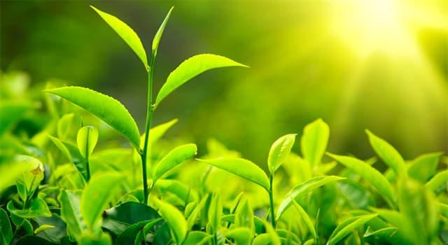 природа Запитання-цікавинка: Які рослини є найдавнішими в світі?
