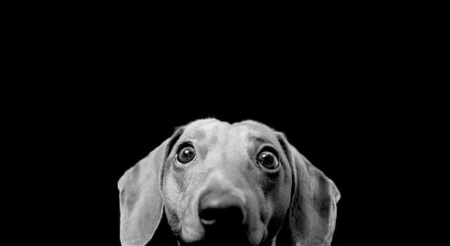 natura Pytanie-Ciekawostka: Które zwierzę potrafi przetrwać nawet bardzo ciężkie odwodnienie?