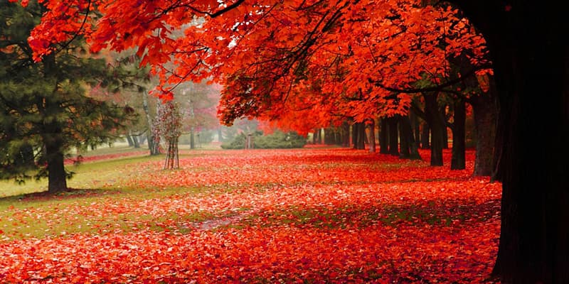 природа Запитання-цікавинка: Якого числа день осіннього рівнодення?