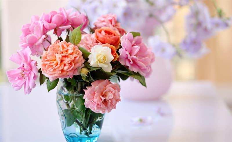 Культура Запитання-цікавинка: Який квітка вважається символом Франції?