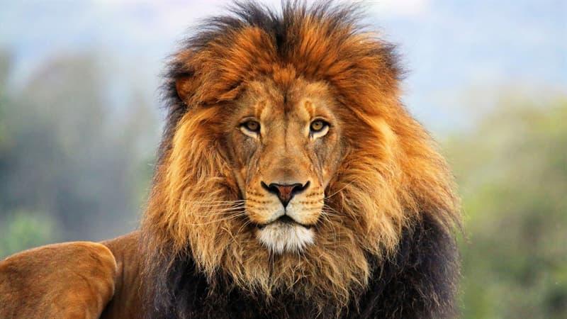 природа Запитання-цікавинка: Якому африканського тварині поступається дорогу навіть лев?