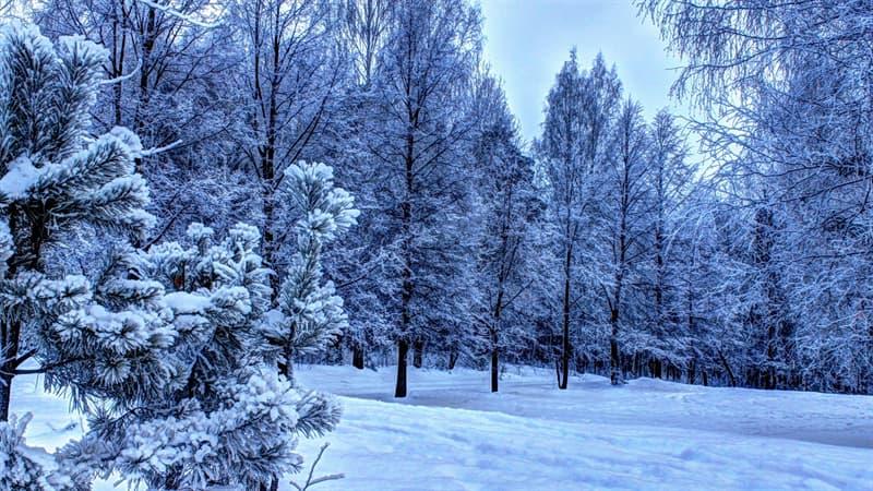 природа Запитання-цікавинка: Коли день зимового сонцестояння?
