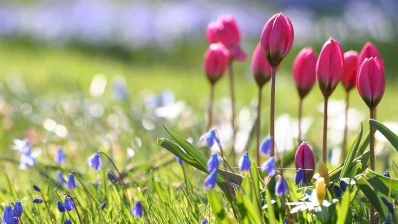 природа Запитання-цікавинка: Коли настає астрономічна весна?
