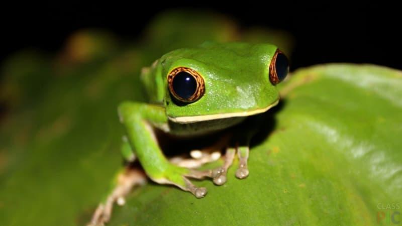Культура Запитання-цікавинка: Кухня якої країни включає в себе страви з жаб'ячих лапок?
