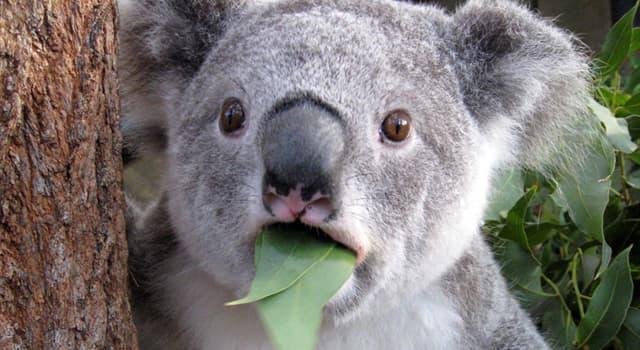Natur Wissensfrage: Welches dieser Tiere hat eine Fähigkeit zur Thermoortung?