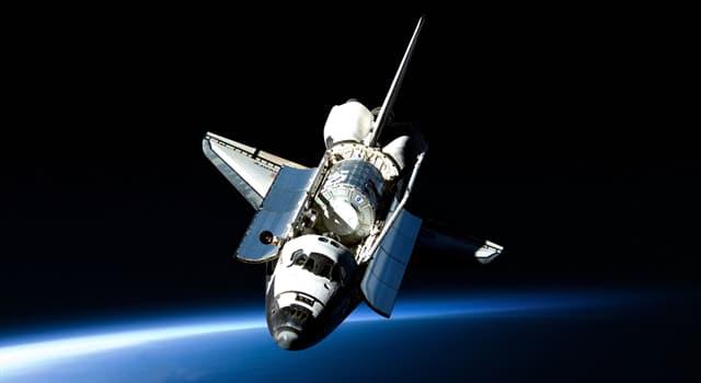 природа Запитання-цікавинка: Чи правда, що блоха може розганятися швидше ніж космічний шаттл?