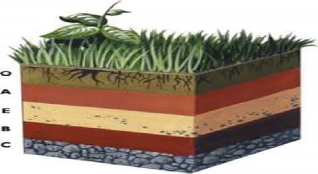 Geografía Pregunta Trivia: ¿Qué ciencia se encarga de evaluar, estudiar y comparar los suelos y determinar si su composición afecta a la naturaleza?