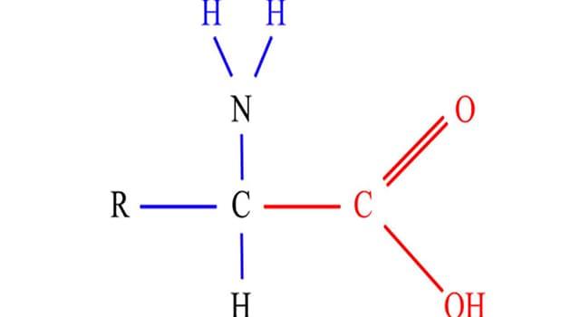Сiencia Pregunta Trivia: ¿Qué son los aminoácidos?