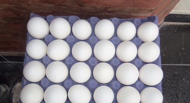 Naturaleza Pregunta Trivia: ¿Qué animal pone los huevos más grandes?