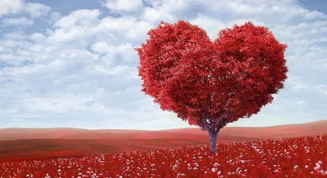 Наука Запитання-цікавинка: Скільки камер в серці людини?
