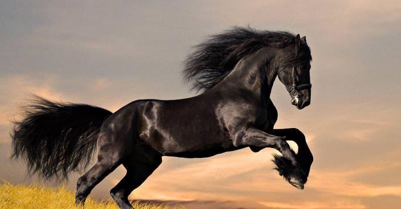 природа Запитання-цікавинка: Скільки місяців триває період вагітності у коня?