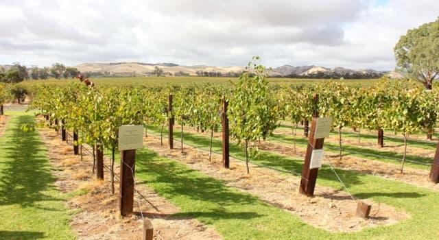 Geografia Pytanie-Ciekawostka: W którym kraju znajduje się dolina Barossa znana z produkcji wina?