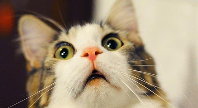 природа Запитання-цікавинка: У якої тварини немає слуху?