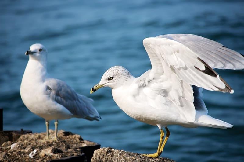 Natur Wissensfrage: Welcher dieser Vögel hat Flügel, die ganz unmerkbar sind?