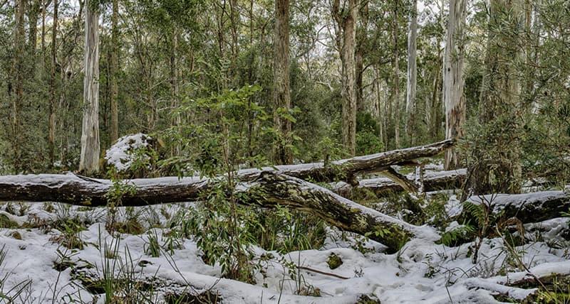Географія Запитання-цікавинка: В якому місяці в Австралії починається зима?