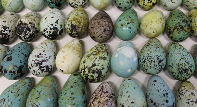 natura Pytanie-Ciekawostka: Jaki jest naukowy termin na badanie jaj ptasich?