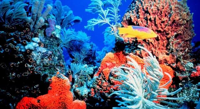 natura Pytanie-Ciekawostka: Z czego składa się szkielet koralowców?