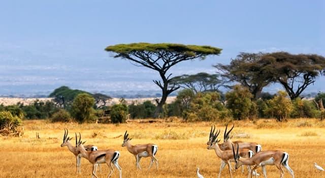 Naturaleza Pregunta Trivia: ¿Cómo se llama el animal mamífero más rápido del mundo?