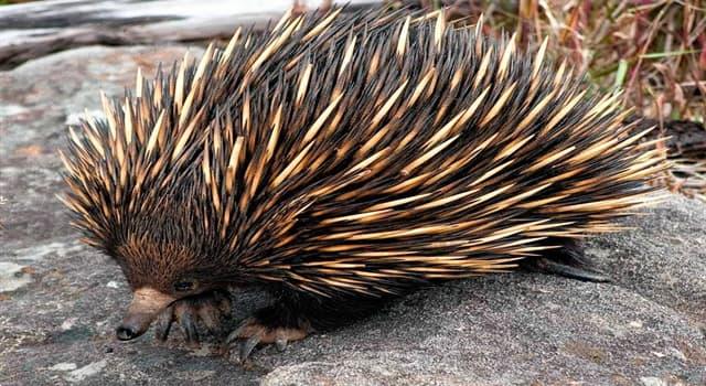 Naturaleza Pregunta Trivia: ¿Cuál de los siguientes animales es mamífero y pone huevos?