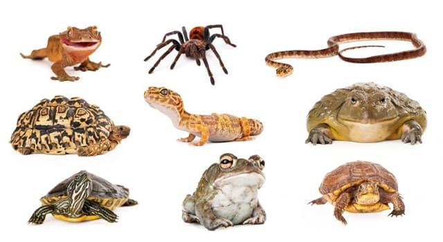Naturaleza Pregunta Trivia: ¿Cuál de los siguientes animales siempre es macho al nacer?