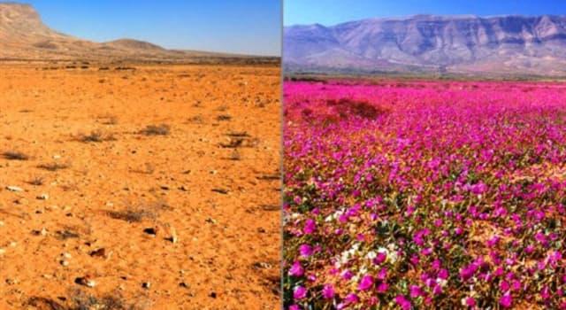 """Naturaleza Pregunta Trivia: ¿En qué país la naturaleza nos brinda el maravilloso espectáculo de """"El Desierto Florido""""?."""