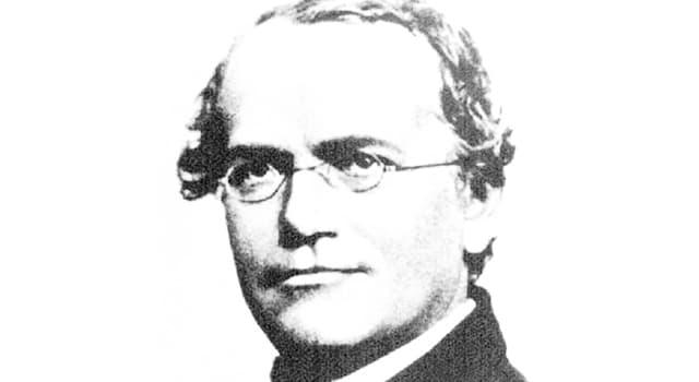 nauka Pytanie-Ciekawostka: Gregor Mendel był założycielem której nauki?
