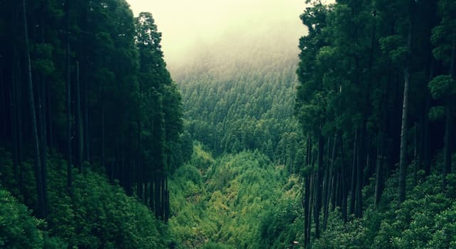 природа Запитання-цікавинка: Як називається густий ліс?