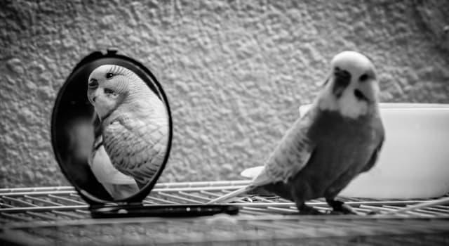 natura Pytanie-Ciekawostka: Który ptak przechodzi test lustra?