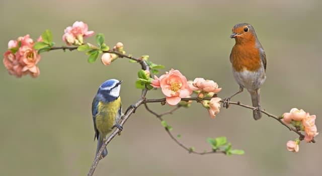 природа Запитання-цікавинка: Яка птах має найдовшим язиком в світі?