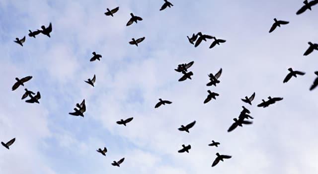 природа Запитання-цікавинка: Яка птах є найрозумнішою в світі?