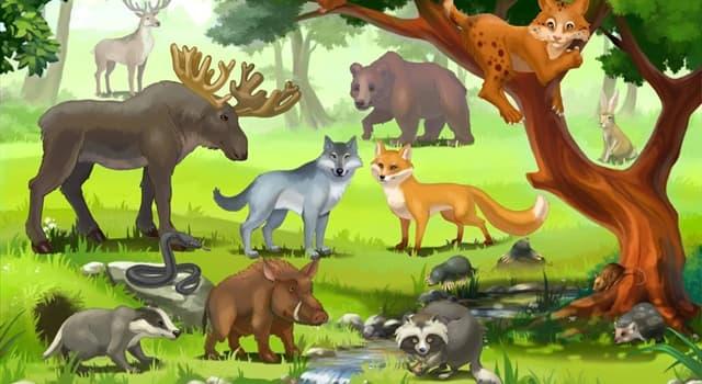 природа Запитання-цікавинка: Яка тварина називають сікачем?