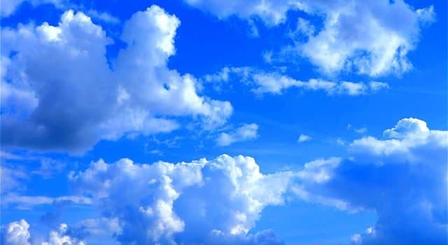 природа Запитання-цікавинка: Яка тварина не може побачити небо?