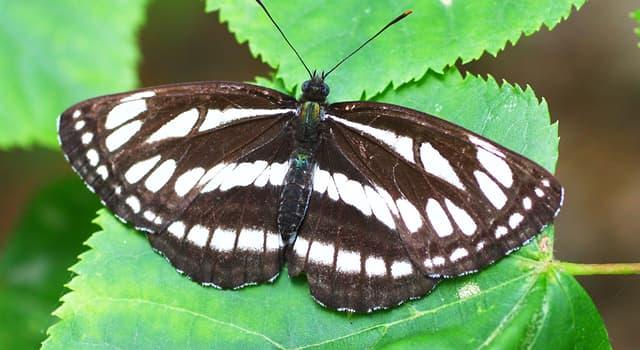 Wissenschaft Wissensfrage: Wie heißt der Zweig der Zoologie, der sich mit den Insekten beschäftigt?