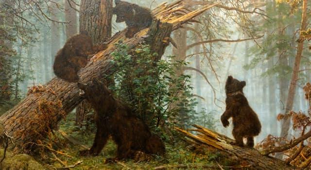 """Культура Запитання-цікавинка: Хто написав картину """"Ранок в сосновому лісі""""?"""