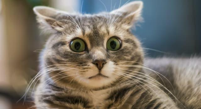 природа Запитання-цікавинка: Меринос є породою якої тварини?