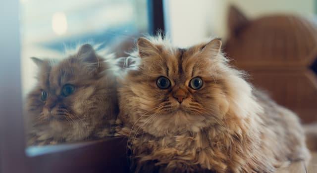 Natur Wissensfrage: Warum reagieren die Katzen oft auf ihr Spiegelbild nicht?