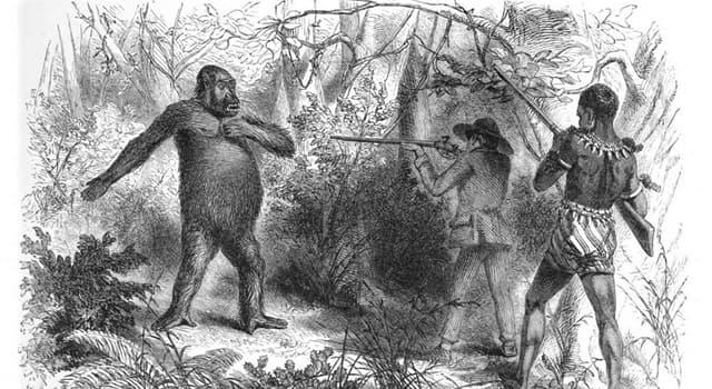 Naturaleza Pregunta Trivia: ¿Quién fue el explorador que confirmó la existencia de gorilas y pigmeos en África?