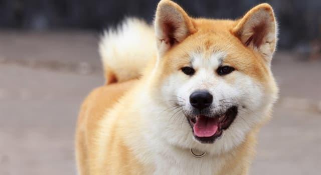 природа Запитання-цікавинка: Собака якої породи зображена на фото?