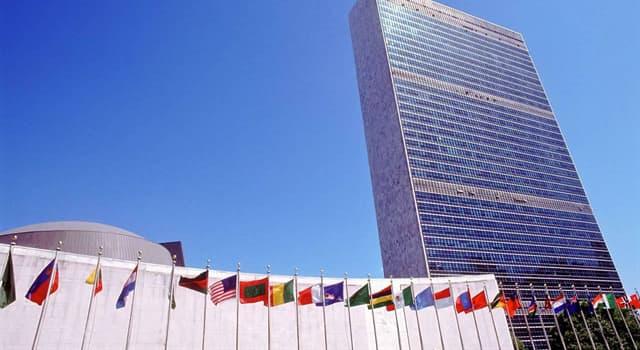 Суспільство Запитання-цікавинка: Гілки якого дерева присутні на прапорі ООН?