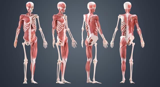 nauka Pytanie-Ciekawostka: Której części ludzkiego ciała dotyka lordoza?
