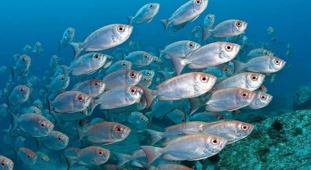 природа Запитання-цікавинка: Яка риба вважається найотруйнішою в світі?
