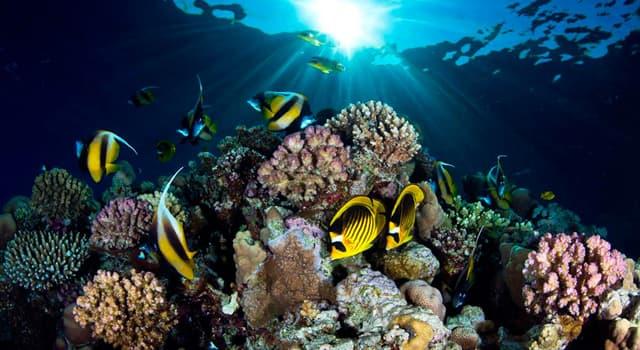 природа Запитання-цікавинка: Яка риба є найповільнішої в світі, відповідно до книги рекордів Гіннеса?
