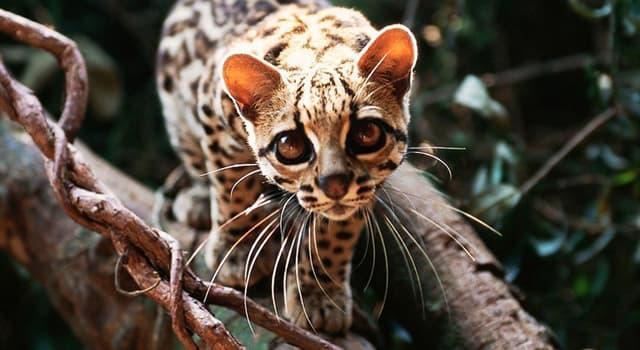 Natur Wissensfrage: Was für ein Tier ist auf dem Foto dargestellt?