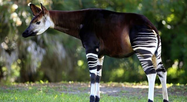 natura Pytanie-Ciekawostka: Co to za zwierzę na obrazku?