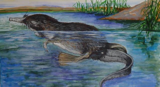 природа Запитання-цікавинка: Яка тварина зображено на малюнку?