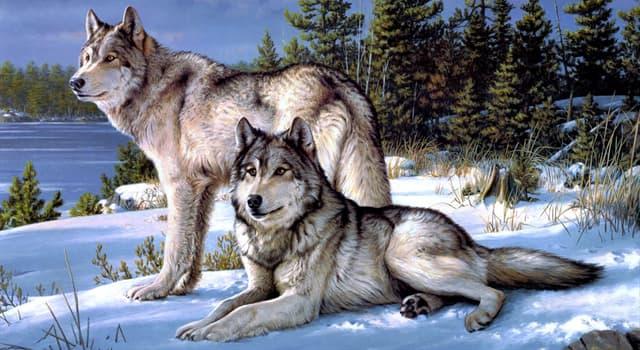 природа Запитання-цікавинка: Хто з перелічених тварин є найменшим представником сімейства псових?