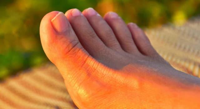 społeczeństwo Pytanie-Ciekawostka: Gdzie trzeba jechać aby pocałować zmumifikowany ludzki palec u nogi?